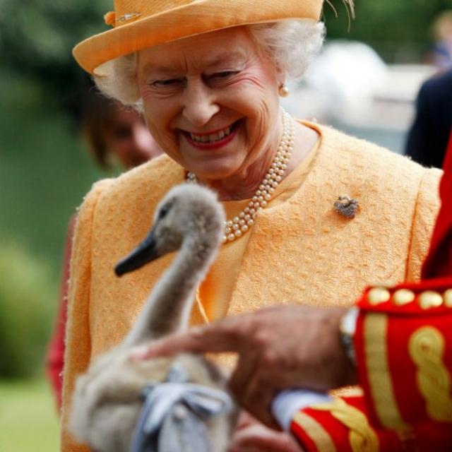 Как писал неофициальный королевский биограф Брайан Хой, королева Елизавета II обожает животных. Королева официально является законным совладельцем каждого лебедя в Великобритании а также делает все возможное, чтобы помочь росту популяции красных белок в замке Балморал.