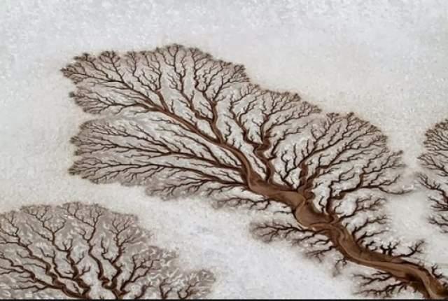 Древние рисунки. На фотографии не русло реки и даже не дерево, хотя очень похоже. Эти древовидные фигуры в Нижней Калифорнии (Мексика) формируются на песке из-за высокой амплитуды приливов и отливов на мелководье и благодаря течению реки.