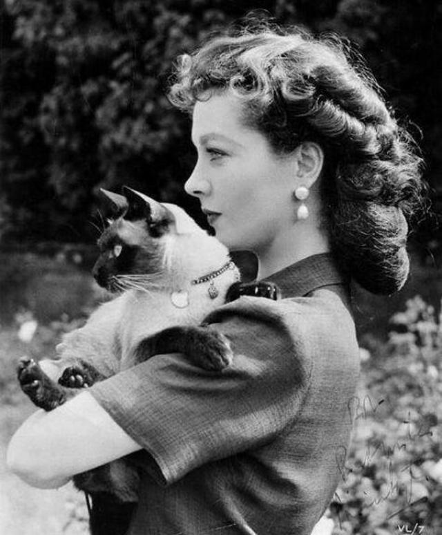 После смерти Нового, чтобы заглушить боль потери, Лоуренс Оливье подарил Вивьен сиамского котенка, которого назвали Армандо.
