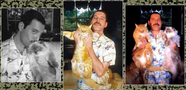 """Первыми у Фредди Меркьюри появились кот Оскар и кошка Тиффани, которых он баловал, как только мог. Именно им даже посвящен первый сольный альбом исполнителя """"Mr. Bad Guy"""": """"Моим котам Оскару и Тиффани и всем котолюбам во вселенной""""."""