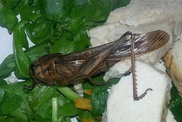 Кузнечик, обнаруженный в салате, увы, не выжил. Беренис Бейкер, нашедшая насекомое получила в виде извинений бесплатный ланч.