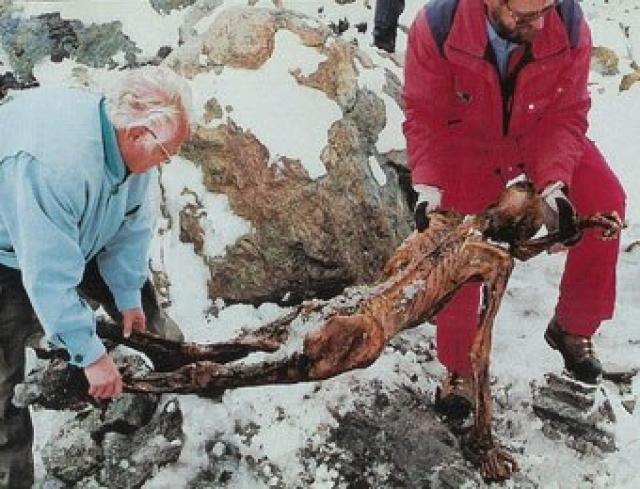 Лавина унесла жизнь Курта Фрица - гида, который руководил перевозкой тела. Альпинист Хельмут Симон, первым обнаруживший Эци, погиб в 2004-м году примерно в том же районе, сорвавшись в пропасть.