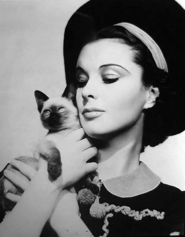 Вивьен Ли. Первый кот актрисы - это Тисси, беспородный черно-белый котенок, усыновленный актрисой в самом начале совместной жизни с Лоуренсом Оливье.
