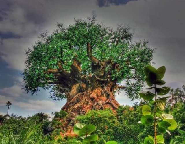 Авторы снимка утверждали, что это некое мистическое дерево в Африке, это на самом деле это чудо-дерево обнаружили в развлекательном парке аттракционов Disney World во Флориде.