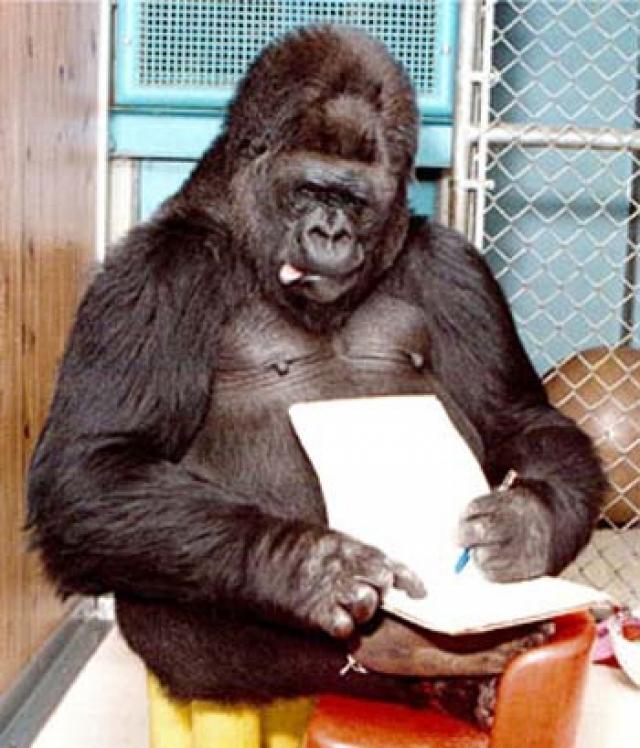 В результате исследований были показаны способности приматов к речи и мышлению, а также сделаны выводы относительно родства человека и обезьян.