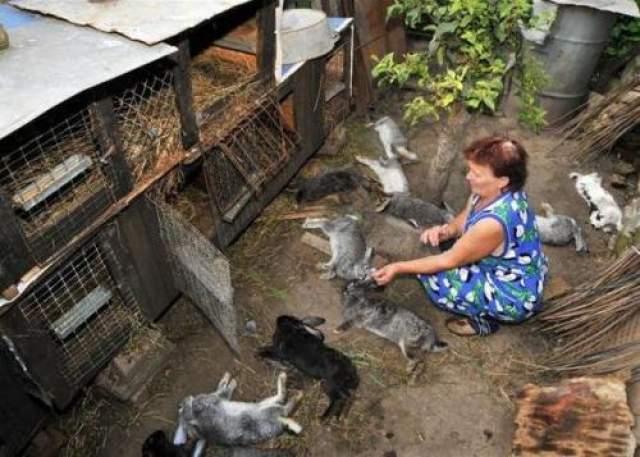 В некоторых деревнях неведомых убийца уничтожил почти всех домашних животных и стал уже подбираться к людям.