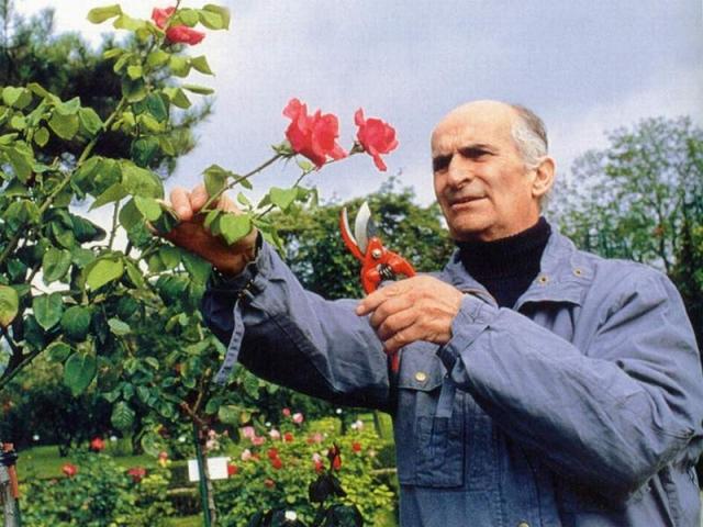 В 1975 году де Фюнес пережил сразу два инфаркта. По настоянию врачей актер ушел из кино и переехал в загородное имение XVII века Шато-де-Клермон неподалеку от Нанта, где увлеченно занимался выращиванием роз.