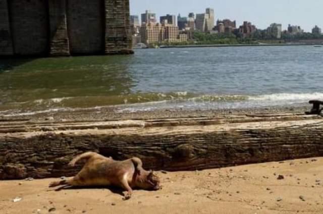 Определить вид животного не смог ни один зоолог, а труп быстро забрала и уничтожила городская служба благоустройства.