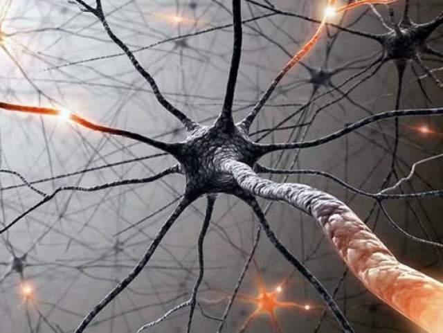 Скорость возбуждения нейронов - около 240 км/час.