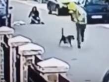 В Черногории бездомный пес спас девушку от грабителя