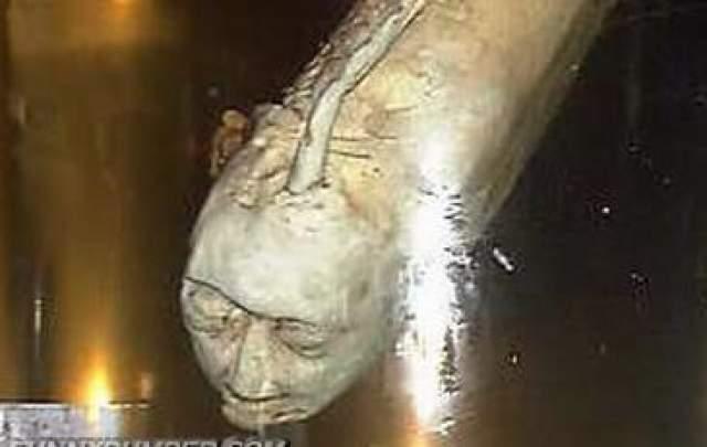 Как выяснилось, появление рыб стало результатом экспериментов по скрещиванию особей карпа и рыб-мандаринки (аухи). Хозяин дома, имя которого не называлось, увлекся подобными экспериментам в 1986 году.