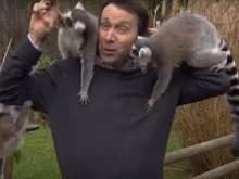 Любопытные лемуры искусали корреспондента BBC во время репортажа в зоопарке