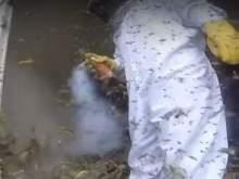 Уничтожение гигантского гнезда ос засняли на GoPro