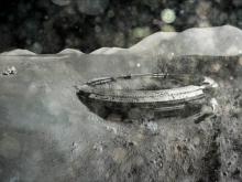 Уфологи увидели на фото Луны 1969 года обломки НЛО (ФОТО)