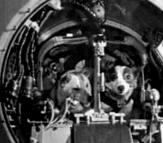 Состояние невесомости не оказывало существенного воздействия на систему кровообращения. Температура тел собак не изменялась в течение всего полета.