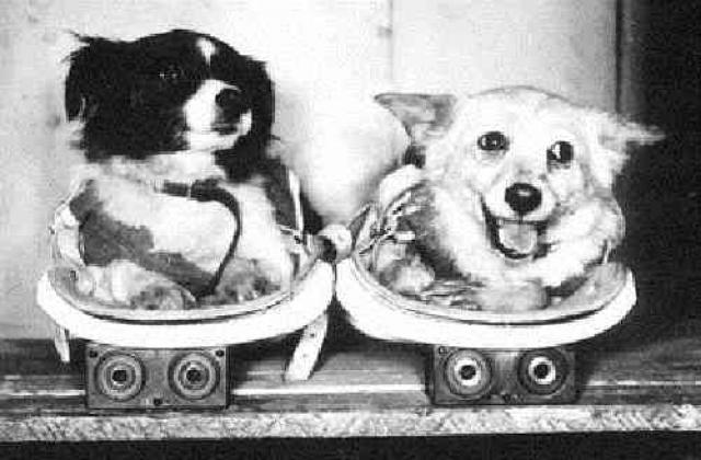 Собаки Дезик и Цыган стали первыми живыми существами, впервые в истории осуществившими полет на баллистической ракете в верхние слои атмосферы до условной границы с космосом.