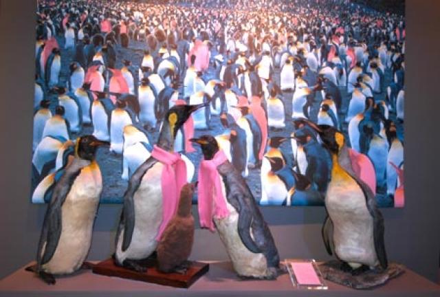 """""""Животные-геи"""". Фотовыставка в Музее естественной истории в Осло"""