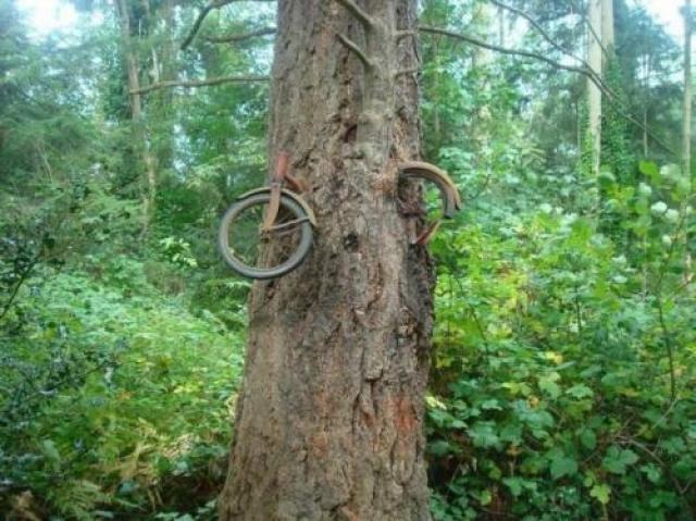 Юноша отправился на войну в 1914 году и прислонил велосипед к дереву. Романтичная история о юноше, который уходя на войну прислонил свой велосипед к дереву и так к нему и не вернулся, оказалась фейком. Впрочем, сама фотография настоящая.