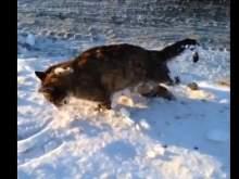 В Казахстане от сильных морозов животные замерзают насмерть на бегу