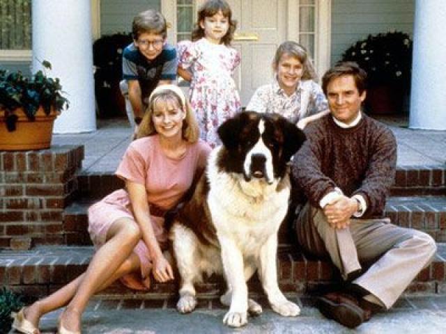 Сенбернар Крис. На роль Бетховена претендовало 12 собак, но победил именно Крис, поскольку любил пошалить: легко перелетал на улицу через окно, падал в обморок по команде, умел слизывать еду со стола.