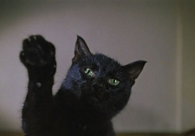 """Еще он верил в мистическую силу черных кошек, считал: они приносят удачу, потому и снимал их в каждой картине. В комедии """"Иван Васильевич..."""" черный кот первым проникает из квартиры в царские палаты, в конце шапка Мономаха превращается в кота."""