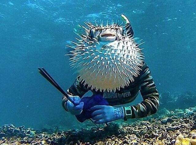 Морской человеко-еж.