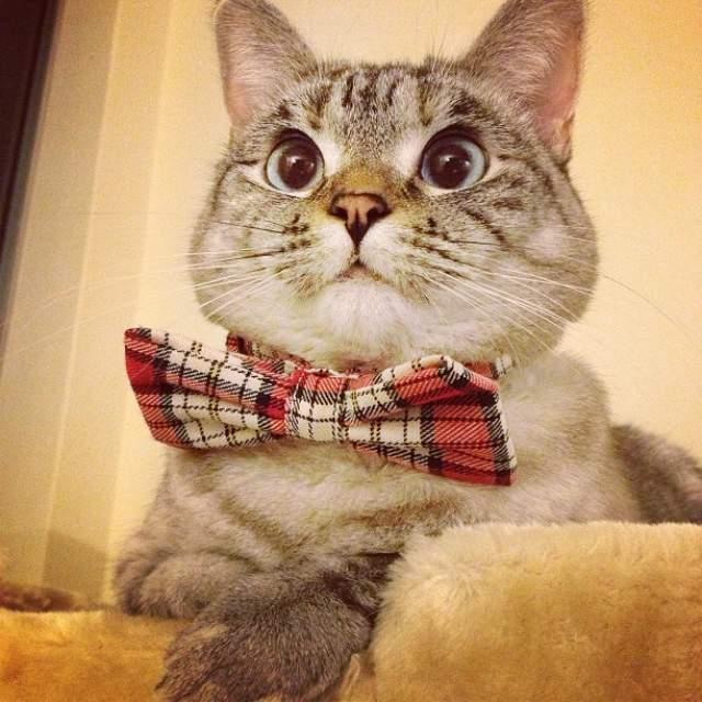 Кошка Нала - появилась на свет в результате скрещивания сиама и полосатой кошки, а благодаря необычной внешности стала звездой Instagram с 3,5 миллионами подписчиков.