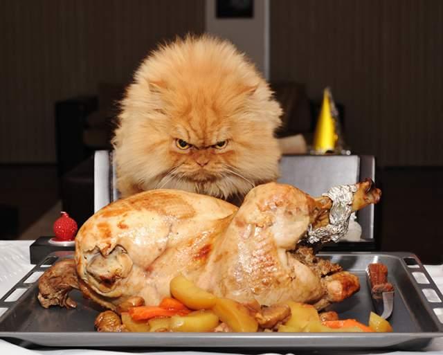 В Интернете даже начала ходить шутка, что кот так зол, потому что его слишком часто переодевают и фотографируют.