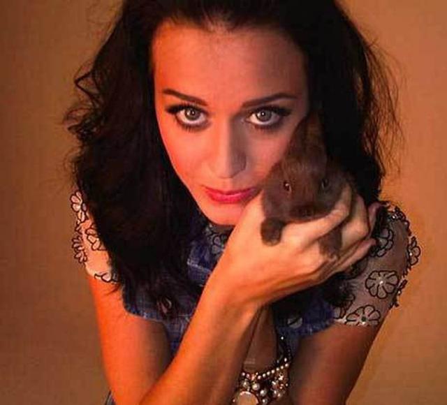 Кэти Перри и кролик