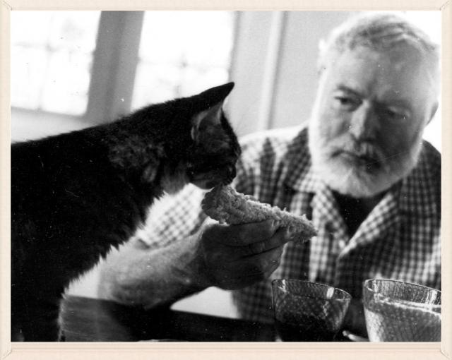 Эрнест Хемингуэй. Писатель питал необъяснимую слабость к кошкам.