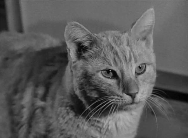 Продюсеры потратили 6 месяцев на поиск нужного кота, было просмотрено 500 кошек, прочитано 3000 писем с кошачьими фотографиями, но на роль был выбран 6,5-килограммовый Оранджи.