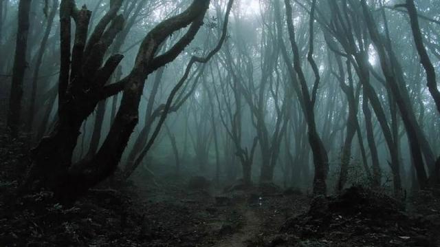 """Лес Хойя-Бачу. Лес, расположенный неподалеку от румынского города Клуж-Напока, называют """"бермудским треугольником Трансильвании""""."""