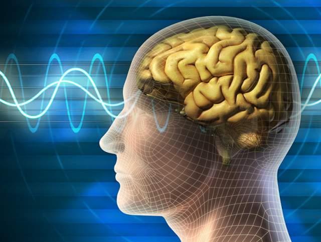 Человеческий мозг, особенно его предлобная кора, которая помогает людям развивать социальные навыки и общение с другими людьми, продолжает развиваться до 40 лет и даже дольше.