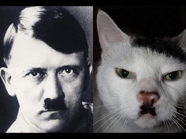 Еще одной фобией Адольфа была айлурофобия - страх кошек.