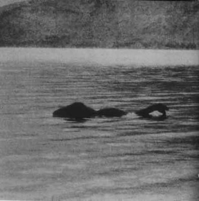 """Лох-Несское чудовище В 1934 году в английском """"Дейли Мейл"""" появился первый в истории снимок Лох-Несского чудовища, легенды о котором бытовали уже давно. Автор снимка, лондонский хирург Уилсон, утверждал, что заснял монстра случайно, когда прогуливался в окрестностях."""