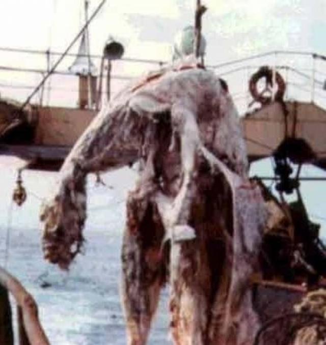 """В апреле 1977 года японские рыбаки с траулера """"Цуйо Мару"""" выловили полуразложившийся труп неизвестного животного."""