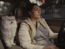 Любительский рекламный ролик с пушистым котом увеличил цену старой Honda Accord в 40 раз