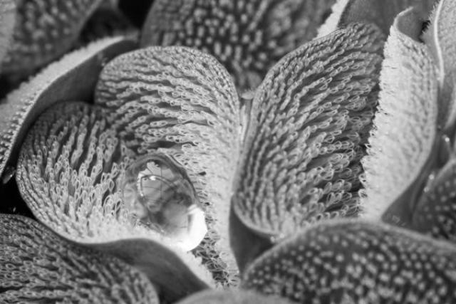 """Победитель в категории """"Эволюционная биология"""" Вода на поверхности листьев карибского папоротника Salvinia molesta."""