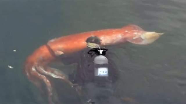 Ученые определили, что эта особь являлась второй самкой, но почему ее вынесло на берег - никто так и не понял. Явных причин смерти не было обнаружено.