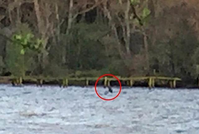 Не так давно туристка Хэйли Джонсон, остановившаяся в отеле Urquhart Bay на берегу Лох-Несс, сделала с этого места снимок с очертаниями непонятного существа.