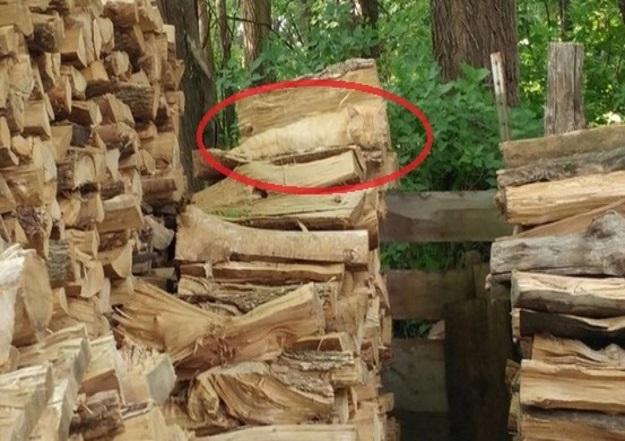 окружению кошка на картинке с дровами циничные