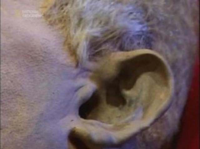 И через двадцать пять лет не было никаких признаков гниения и никакого запаха, его волосы, ногти и кожа были сухими, но целыми. Внутренние органы также были целы.