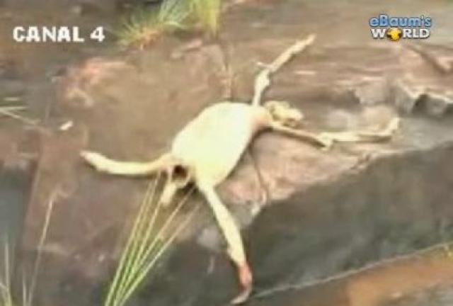 Существовали различные предположения о происхождении существа, включая версии о том, что это был лишившийся шерсти ленивец, инопланетное существо или неизвестное науке создание.