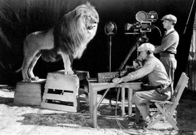 Операторы снимают рев льва для заставки кинокомпании MGM. Кадры стали легендарными.