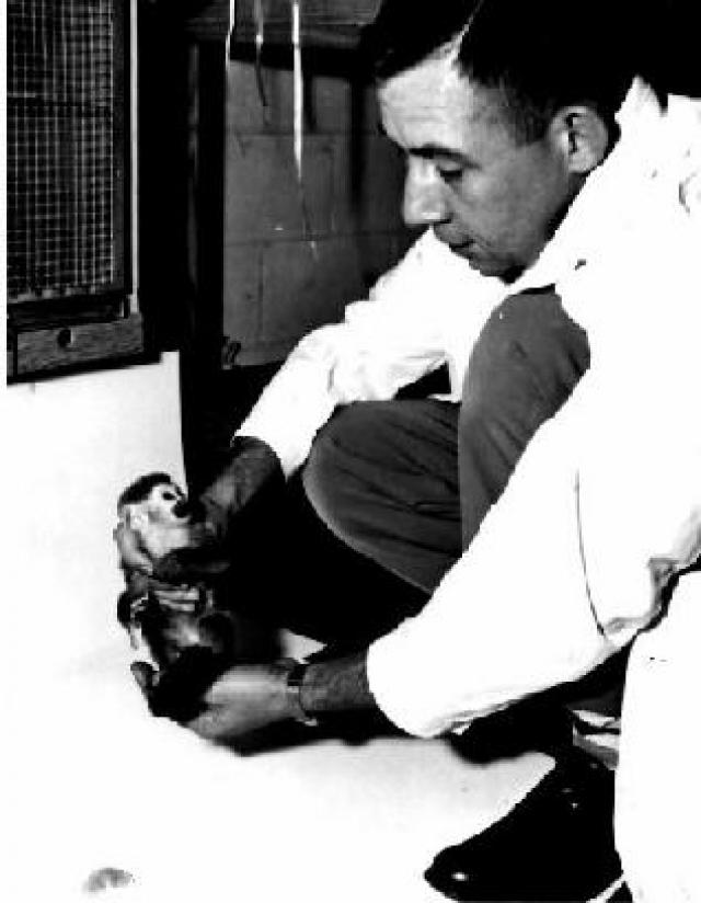 После приводнения капсула утонула, примат погиб.