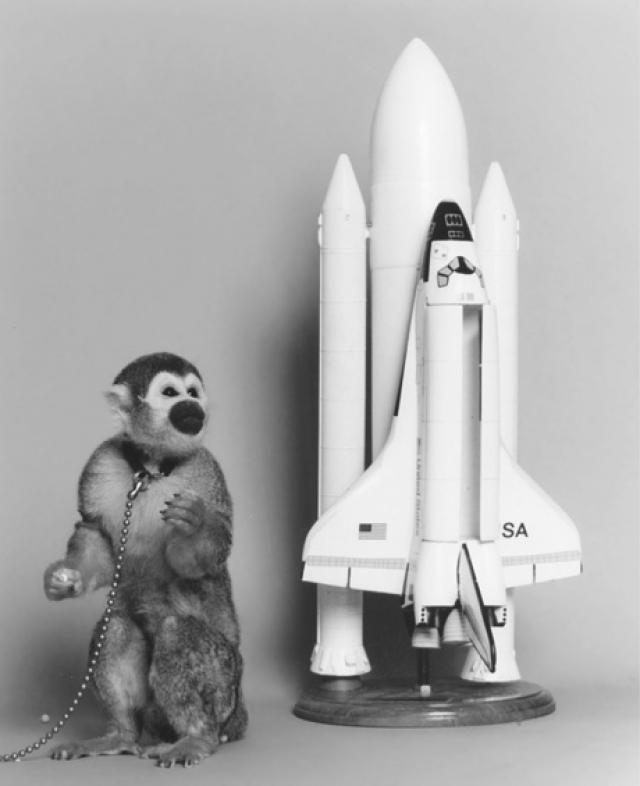 Обезьяна Гордо. Стала первой обезьяной в космосе, она была запущена 13 декабря 1958 года в США.