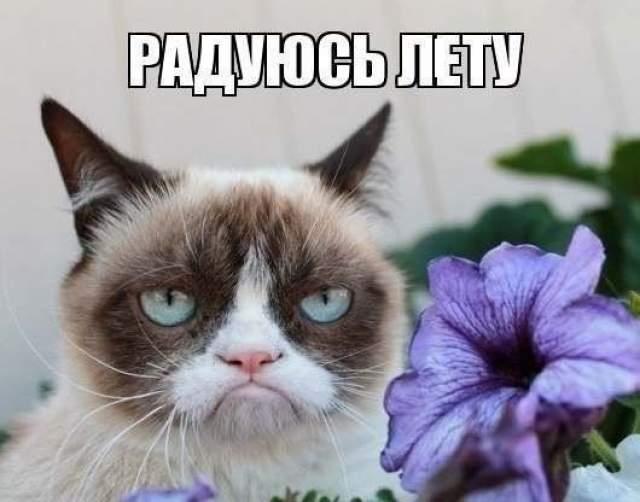 Сначала снимок считали подделкой - слишком уж комичен кот. Характерная брюзгливая внешность совершенно не вязалась с умильными типичными мордашками котов. Оказалось, что у Соуса Тардар врожденная карликовость и неправильный прикус, но аудитория все равно его полюбила.