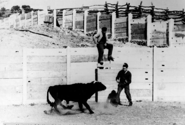 Боевой бык Лусеро. Участник экспериментов Хосе Дельгадо.