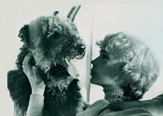 Эрдельтерьер Чингиз (Рэсси). Обаятельный и сообразительный пес,Ю которого Электроник создал из игрушки, стал настоящим украшением фильма.