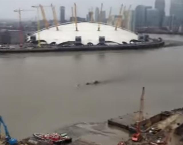 А в прошлом году похожее на Нэсси существо сняли на видео в Лондоне в водах Темзы.